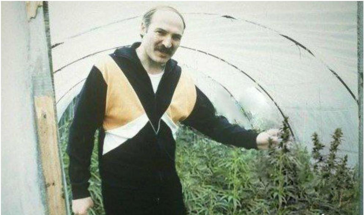 лукашенко выращивает марихуану